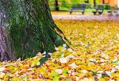 下落的秋叶在公园,软的焦点,浅景深 库存图片