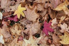 下落的秋叶背景 免版税图库摄影