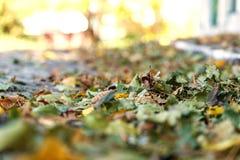 下落的秋叶黄色 免版税图库摄影