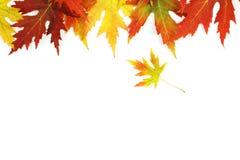 下落的秋天上色了在白色背景的叶子 库存图片