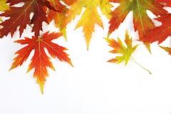 下落的秋天上色了在白色背景的叶子 免版税库存照片