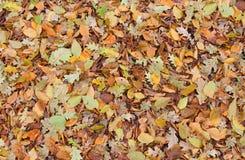 下落的秋天叶子纹理背景 免版税库存图片