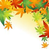 下落的秋天叶子 库存图片