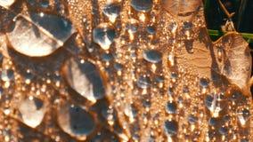 下落的秋天在哪些离开是早晨露水许多美好的下落  在美好的秋叶宏指令关闭的露水 影视素材