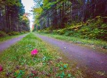 下落的红槭叶子 免版税库存图片