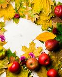 下落的黄色叶子和成熟红色苹果秋天温暖的背景  文本或照片的框架 可适用为文章 库存照片
