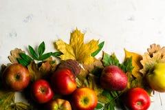 下落的黄色叶子和成熟红色苹果秋天温暖的背景  文本或照片的框架 可适用为文章 免版税库存照片
