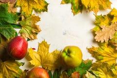 下落的黄色叶子和成熟红色苹果秋天温暖的背景  文本或照片的框架 可适用为文章 库存图片
