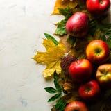 下落的黄色叶子和成熟红色苹果秋天温暖的背景  文本或照片的框架 可适用为文章 免版税图库摄影