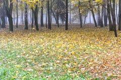 下落的黄色和桔子在地面上离开 有ba的城市公园 免版税库存照片