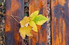 下落的黄色在下午留下放置在长木凳 顶视图 免版税库存图片