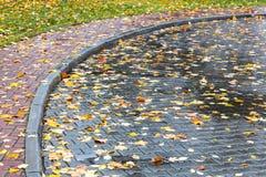 下落的黄色在湿路面离开与水坑在雨以后 免版税库存图片