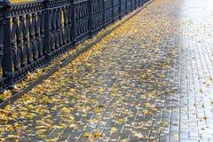 下落的黄色在湿边路表面离开  库存图片