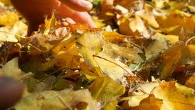 下落的黄色秋叶看法的关闭 股票录像