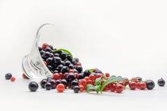 下落的玻璃花瓶用在白色背景的黑和红浆果 库存照片