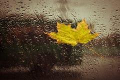 下落的黄色叶子和雨下落 免版税库存图片