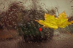 下落的黄色叶子和雨下落 免版税图库摄影