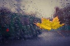 下落的黄色叶子和雨下落 库存照片