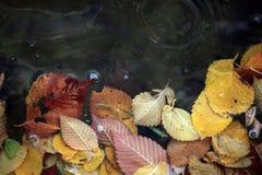 下落的黄色叶子在水中 免版税库存图片