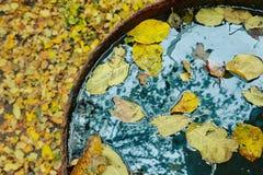 下落的黄色叶子 免版税库存照片