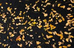 下落的黄色在地面上离开在雨以后在秋天da 图库摄影