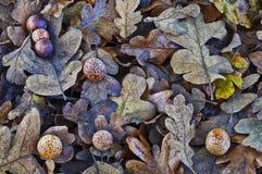 下落的年迈的橡木叶子织地不很细背景  免版税库存照片