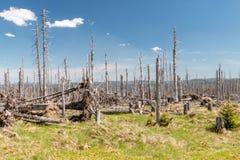 下落的trees_Sumava 图库摄影