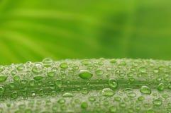 下落绿色叶子工厂水 免版税图库摄影