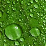 下落绿色叶子水 免版税库存照片