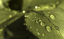 下落绿色叶子水 免版税库存图片