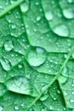 下落绿色叶子 免版税图库摄影