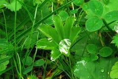 下落绿色留下水 免版税图库摄影