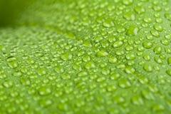 下落绿色叶子工厂水 免版税库存照片