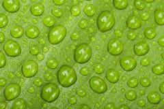 下落绿色叶子工厂水 图库摄影