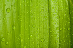 下落绿色叶子工厂水 库存照片