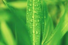 下落绿色叶子工厂水 免版税库存图片