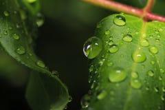 下落绿色留下水 免版税库存图片