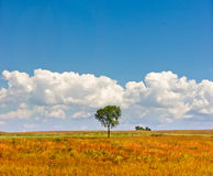 下蓝色唯一天空结构树 免版税库存照片