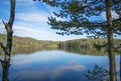 下蓝色多云森林湖天空 免版税库存图片