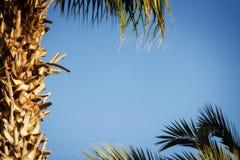 下蓝色掌上型计算机天空结构树 免版税图库摄影