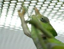 下蜥蜴金属 免版税库存照片