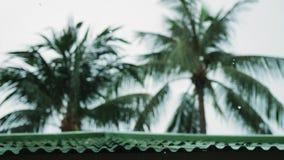 下跌在绿色棕榈树的热带风和雨下落在海岛酸值苏梅岛离开 慢的行动 3840x2160 股票视频
