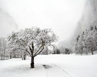 下跌truemmelbach冬天 免版税库存图片
