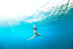 水下跳跃 免版税库存照片