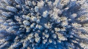 下降下来积雪的森林看法  免版税库存照片