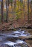 下降在岩石放出森林地 库存图片