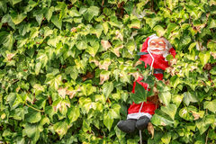 下降在植物中间的好圣诞老人 图库摄影