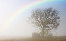 下降的雾在与彩虹的秋天 免版税库存图片