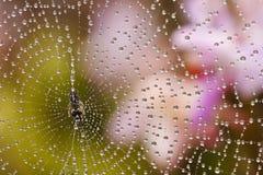 下降蜘蛛水万维网 库存图片