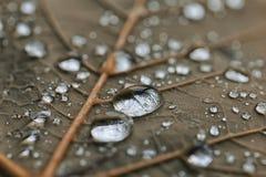 下雨下落 免版税库存图片
